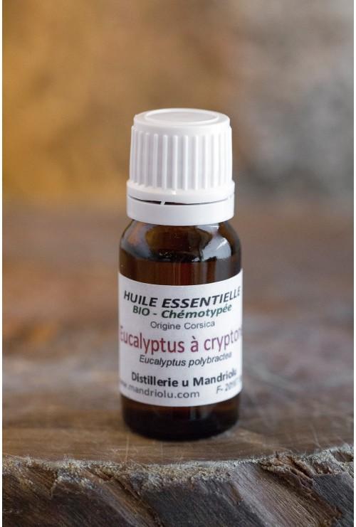 Huile essentielle d'Eucalyptus à Cryptone 10ml
